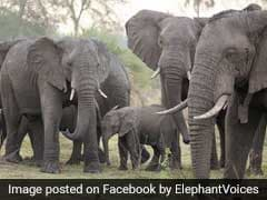 On World Elephant Day, Learn How To 'Speak' Elephant