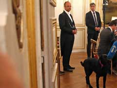 Bad Dog! French President's Pet Interrupts Meeting, Urinates On Fireplace