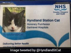 Hard-Working Station Cat Gets Second Job As Honorary 'Purrrfessor'
