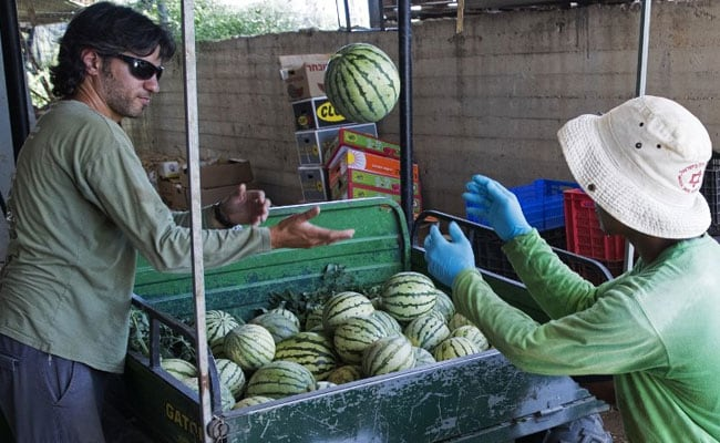 Israelis Log Out Of Hi-Tech Jobs For A Life Offline