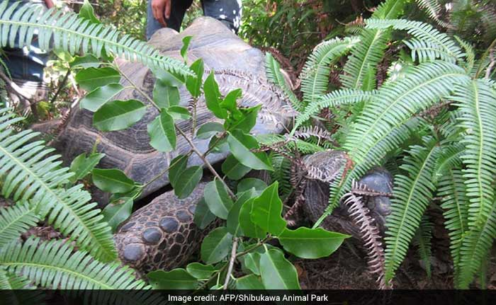 japan tortoise returns 650 afp
