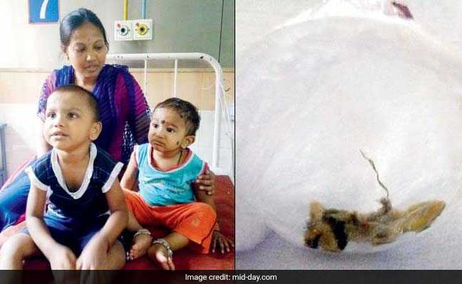 5 Violently Ill In Mumbai After Lizard In Palak Paneer