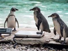 Just 10 Adorable Animal Pictures From London Zoo's Annual Weigh-In