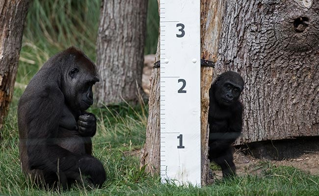 london zoo weigh in