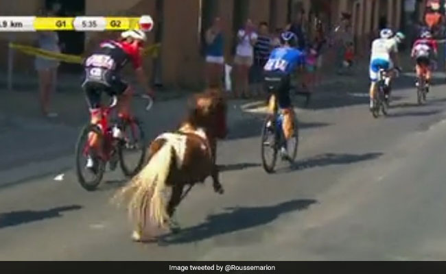 Watch: Pony Gatecrashes Cycling Race And Twitter Is Really Excited