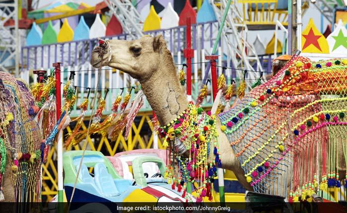 Gogamedi Fair 2017: The Grand Rajasthani Food, Cattle and Handicraft Fair in Honour of Goga Ji Maharaj