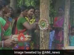 Rakhi 2017: In UP, Jharkhand, People Tie Rakhis To Trees, Pledge To Protect Them