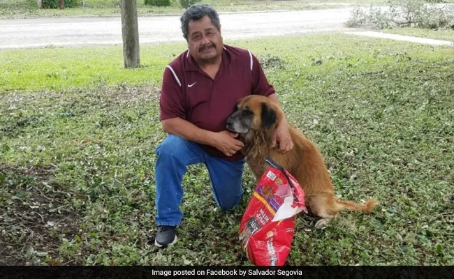 A Photo Of Dog Carrying Bag Food After Storm Hit Texas Went