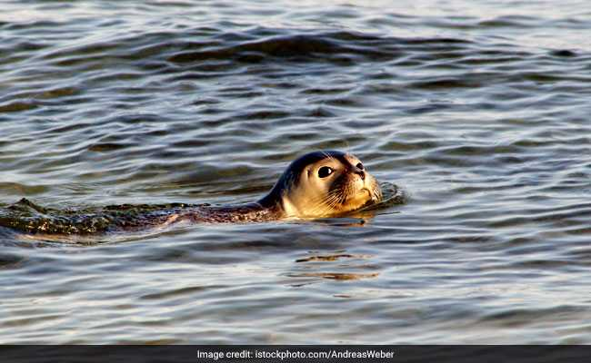 Adorable Seal Does The Sweetest Thing When Family Feeds It Fish