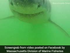 Shark Attacks Underwater Camera. Video Will Give You Goosebumps