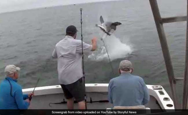 Video: Shark Leaps Out Of Water To Steal Fish. Twice