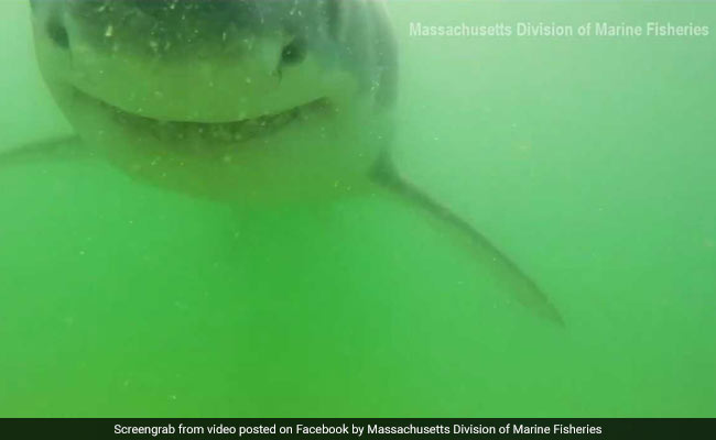 Awesome footage shows great white shark trying to bite an underwater camera