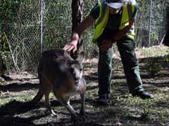 At This Prison, Inmates Give Injured Animals Second Chance To Life