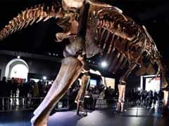 Argentine Titanosaur May Be Oldest Yet, Shows Study