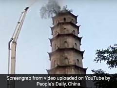 In China, A 100-Year-Old Tree Grows On Top Of A 140-Foot-High Building