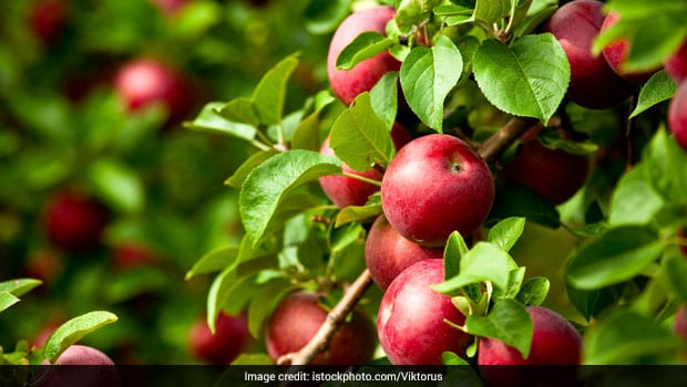 5 Most Popular Fruit Bearing Trees and Their Benefits