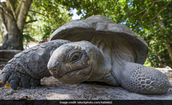 Surprisingly Fleet-Footed Giant Tortoise Escapes Japan Zoo... Again
