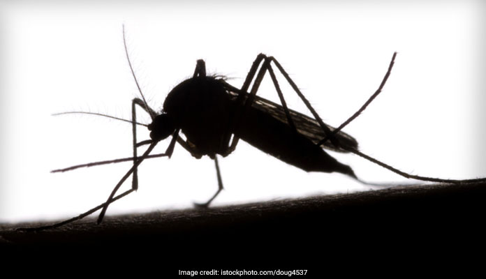 Have Your Ever Heard Of World Mosquito Day? Here's All You Need To Know