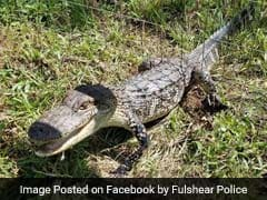 Baby Alligator, Stuck In Fence, Gets Rescued By Cop 'Friends'
