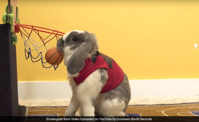 This Athletic Bunny Just Set A World Record Dunking Basketballs