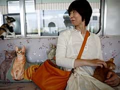 Cats On A Train! Japan Railway Lets Felines Roam To Raise Awareness Of Strays