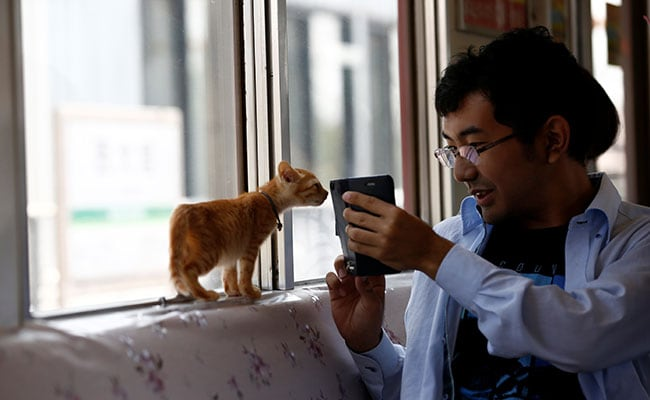cats on train japan reuters