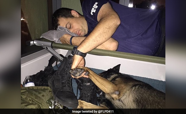 Pic Of Cop Holding K-9 Partner's Paw During Hurricane Irma Will Warm Your Heart