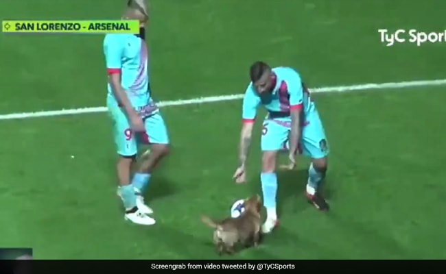 Viral Video: Dog Interrupted Match To Play With Football. No One Seemed To Mind