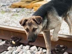 Mumbai Local Motorman Stops Train To Save Dog On Tracks