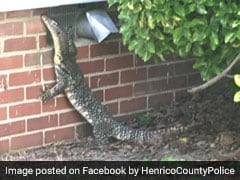 Cops Find Four-Foot Lizard Strolling Through Backyard. See Scary Pics