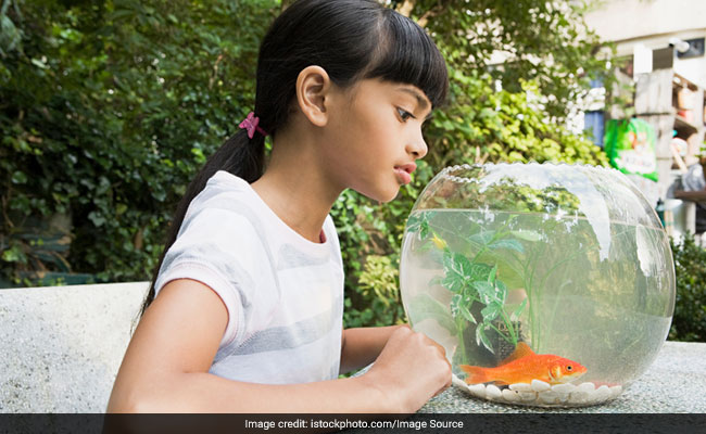 At This Hotel, Lonely Guests Can Rent A Fish For Company