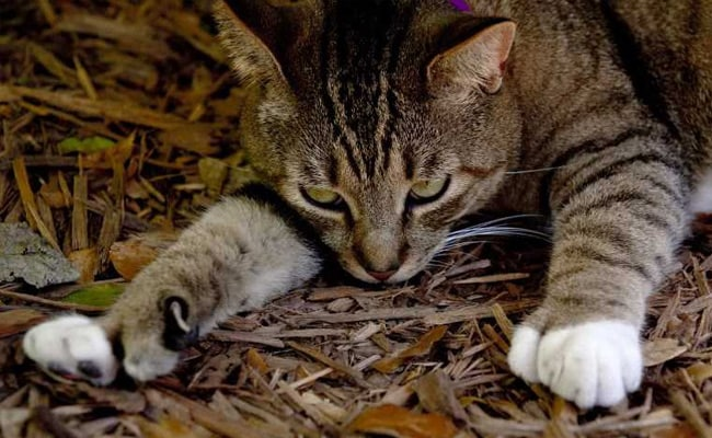 Hemingway's Six-Toed Cats 'Feline' Fine After Hurricane Irma Hits Florida