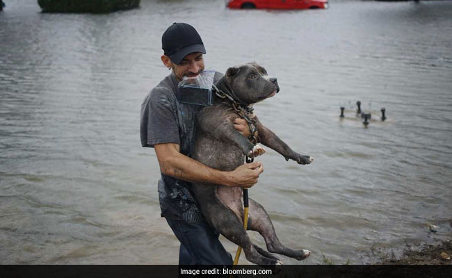 How The Chaos Of Hurricane Katrina Helped Save Pets From Flooding In Texas