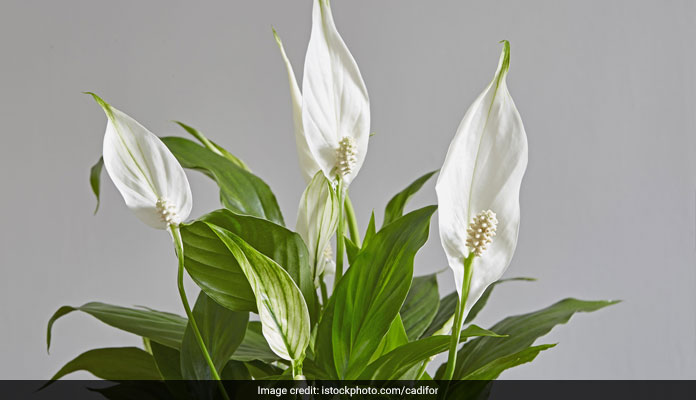 keeping plants indoors have many health benefits