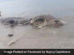 Mysterious 32-Foot Sea Creature Washes Up On Beach. See Pics