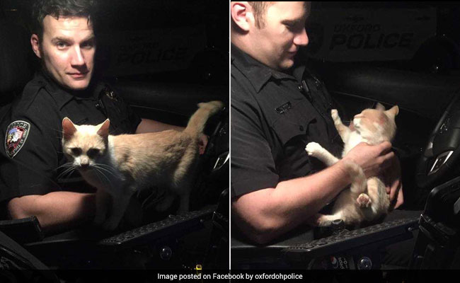 The Cat That Adopted An Officer: It Jumped Into Cop Car, Refused To Leave
