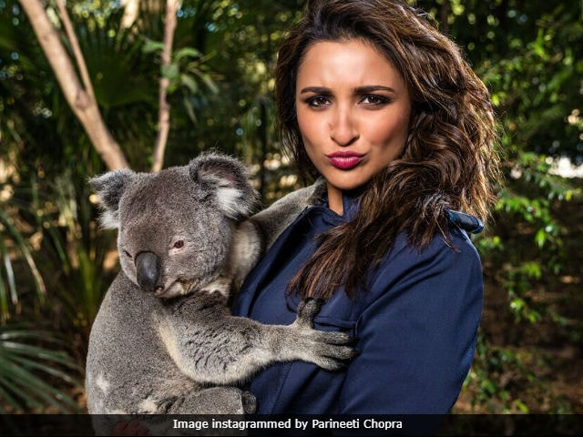 Parineeti Chopra Trolled For Pic With Koala Is Everything That's Wrong With Social Media