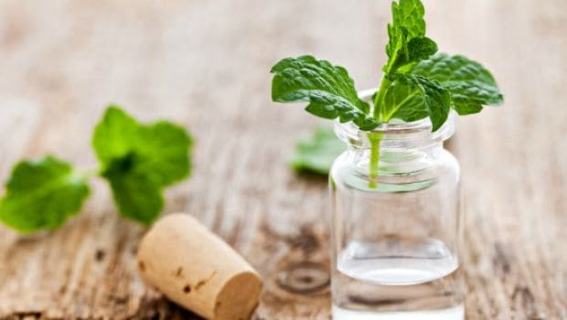 8 Benefits of Peppermint Tea: From Inducing Sleep to Aiding Weight