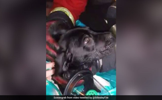 Puppy Fell Unconscious In House Fire. See The Moment He Was Revived