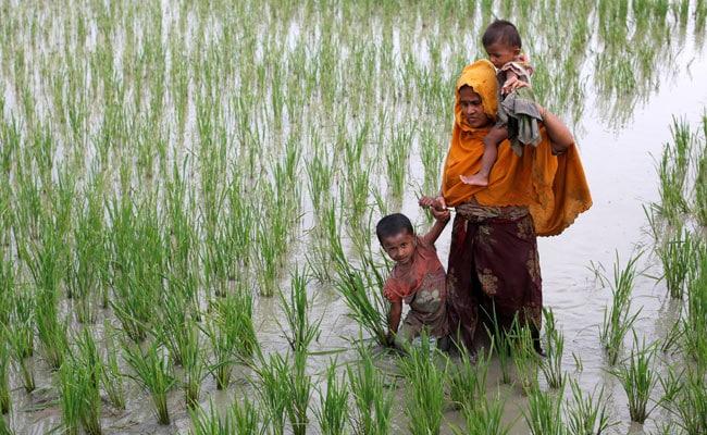 rohingya reuters