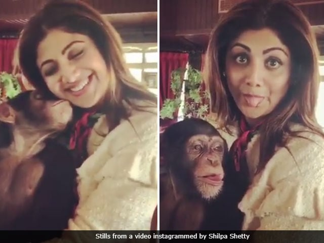 Shilpa Shetty Deletes Videos Of Her And Son With Exotic Animals After Backlash