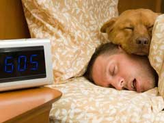 Can Sleeping with Your Pet Affect Your Sleep Quality? Avoiding Citrus Fruits Before Bedtime May Help Sleep Better