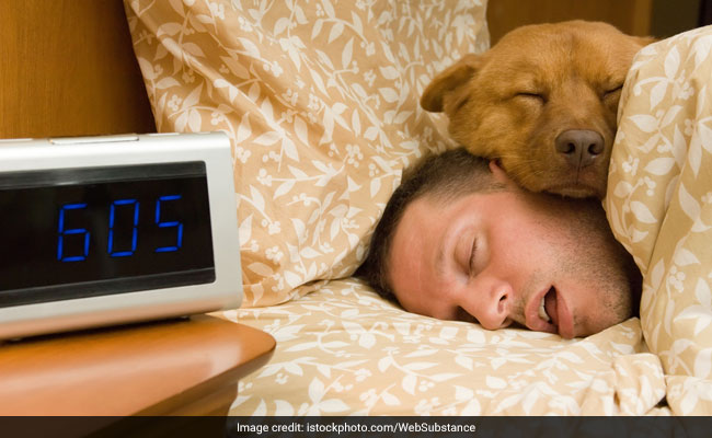 Your Dog Can Help You Get A Better Night's Sleep