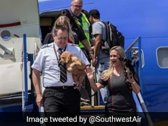 Airline Flies Animals Displaced By Hurricane Harvey To Their New Homes