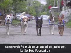 Watch: How Stray Dogs Are Turning Into Crime-Fighting Watchdogs