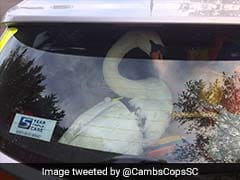 Lawless Swan Arrested For Road Rage, Causing Havoc On Highway