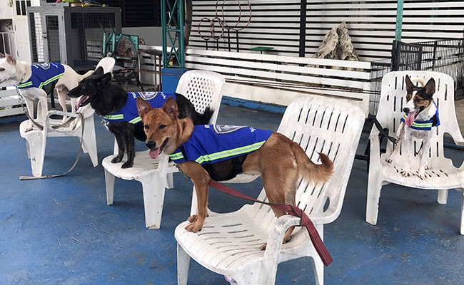 'Smart Vest' Turns Thailand's Stray Dogs Into Street Guardians