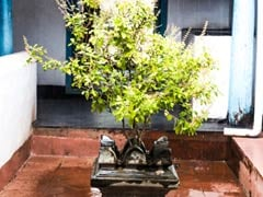 Ganesh Chaturthi 2018: भगवान गणेश की पूजा में नही चढ़ाई जाती तुलसी, जानिए आखिर क्या है वजह