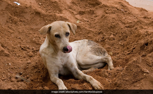 World Rabies Day: Lack Of Attention Is Responsible For Deaths, Says Experts