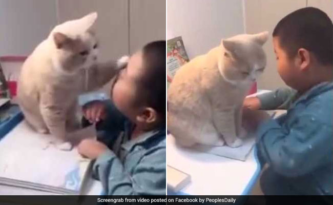 Cat Stops Boy From Studying